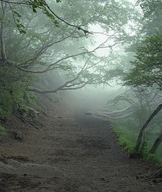 England's Haunted Wychwood Forest abounds in haunted tales of visitors who feel hands reaching out to touch their shoulders or hear the thunder of invisible horses.