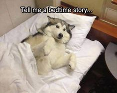 "Funny Animal Pictures Of The Day - 21 Pics #humor explore Pinterest""> #humor #funny… - https://www.soumo.eu/funny-animal-pictures-of-the-day-21-pics-humor-explore-pinterest-humor-funny/"