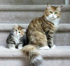 Mom, when I grow up. will I have a tail like yours?