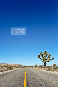 Roadtrip to Joshua Tree / 9 Things to Do in Joshua Tree National Park