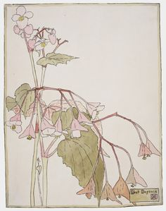 Beef Begonia (circa 1915). Watercolour and ink on paper by Hannah Borger Overbeck (United States, 1870-1931).