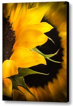 """Golden Summer: A photograph by Karen Wiles - Purchase wall-ready framed prints and canvases, in sizes from 6""""x8"""" to 45""""x60"""" at FineArtAmerica.com"""
