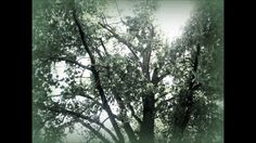 Wye Oak - Civilian - with lyrics