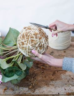 In this extract from Hanging Kokedama by Coraleigh Parker, we discover how to get started on the Japanese method of wrapping plants in moss, soil and string String Garden, Diy Garden Fence, Moss Garden, Planting Succulents, Planting Flowers, Ferns Garden, Big Plants, Exotic Plants, Cool Plants