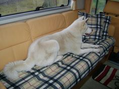 Miyuki's favourite place at our mobilhome car