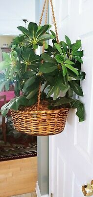 Wall Hanging Plants Indoor, Indoor Plants, Ivy Leaf, Artificial Plants, Vines, Garden, Ebay, Home Decor, Homemade Home Decor