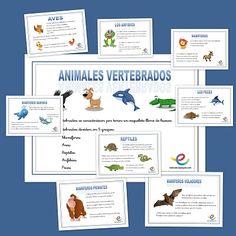 Fichas conocimiento del medio: Los vertebrados
