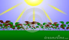 Image representing a cultivation of plants