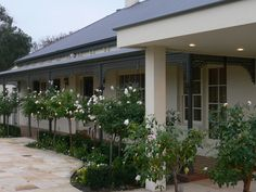 Best Western Plus Brooklands of Mornington Business Events, Best Western, Conference, Tourism, Outdoor Decor, Plants, Beautiful, Turismo, Plant