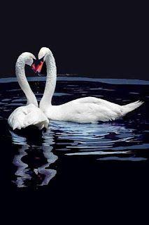 Você faz a Diferença: Amor, paixão, desejo...