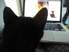 The cat enjoying our newest post on Wine & Rum The Visitors, Barbados, Rum, Wine, Cats, Animals, Gatos, Animales, Animaux