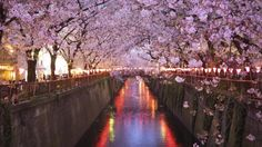 Best ways to see the sights in Tokyo from bullet trains to blossoms | DailyTelegraph