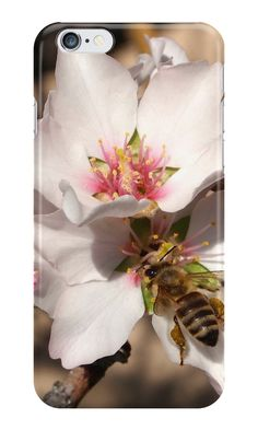 Bee on Apricot Blossom by Douglas E.  Welch