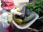 The top Australia Travel Blogs for Families planning or enjoying a trip with kids