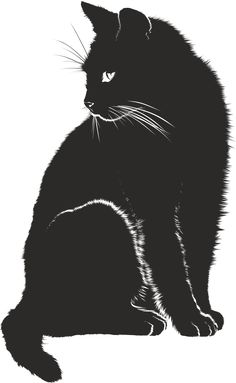 Cat, Shadow, Silhouette, Black, Animal