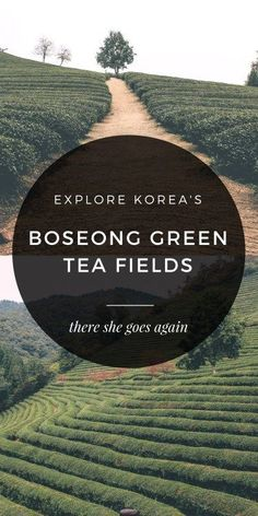 Escape the big cities, and head to the Boseong Green Tea Fields in Korea for some nature, some hiking, and green tea EVERYTHING. South Korea Travel, Asia Travel, Wanderlust Travel, Travel Info, Travel Guide, Travel Plan, Budget Travel, Travel Ideas, Travel Around The World