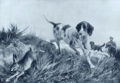 Dog Versus Wildlife
