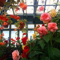we exist: Zdjęcie Flowers Nature, My Flower, Wild Flowers, Beautiful Flowers, Nature Aesthetic, Flower Aesthetic, Plants Are Friends, No Rain, Land Scape