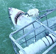 Great White Shark cage diving in South Africa http://angieaway.com/2012/06/13/great-white-shark-cage-diving/