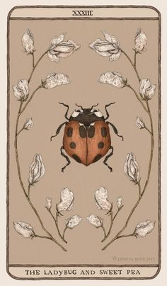 """jessicaroux: """"The Ladybug and Sweet Pea, another card for Woodland Wardens! This one is all about gratitude and making your own luck. Woodland Wardens is an ongoing oracle deck inspired by flora and fauna. Art And Illustration, Botanical Illustration, Illustrations, Woodland Illustration, Arte Van Gogh, Lady Bug, Tarot Cards, Oracle Deck, Art Inspo"""