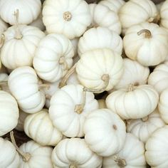 white pumpkins. they're a buck each and I think they're cute. completely unnecessary, but cute #EveryCrayonCounts #penguinkids
