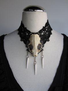 $64 Skull Taxidermy