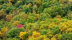 A few days in Shenandoah National Park to witness the Fall Colors. Director of Photography Richard Parry Editing Richard Parry Shot On Location October… Shenandoah National Park, National Parks, Photo And Video, Plants, Pictures, Photography, Photos, Photograph, Fotografie