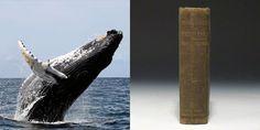 İlginçBiBilgi:Moby Dick'in yazıldığı dönemde doğan balinalar hala yaşıyor..