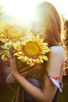 Sun Flowers in the Summer Sun