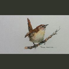 Latest video posted on YouTube. A painting of a wren. Link to my YouTube Channel is in my bio or Cut and Paste:        https://m.youtube.com/c/petersheelerart  #Video #youtube #youtubers #landscape #art #original #watercolor #winsorandnewton #watercolour #painting #paintingaday #penandink     #architecture #ink #moleskine_arts  #canada #ImagesofCanada #wren #songbird #bird