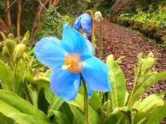 29 Best Flowers In Perth Scotland Images Perth Scotland Perth