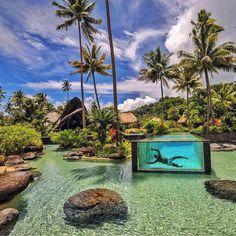 Traumhafte Location 😍 Fiji! Mehr Zu Den Themen Reisen U0026 Urlaub Findest Du  Auf Unseren