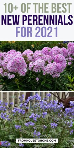 I've been wanting to know more about the best new perennials for 2021 and this article has helped me out so much. It really is a great way to find some great perennials that bloom all summer and learn which ones are the best new shade perennials for your garden. | Shade Perennials Partial Shade Perennials, Shade Flowers Perennial, Full Sun Perennials, Flowers Perennials, Shade Plants, Sun Plants, Phlox Plant, Yarrow Plant, Full Sun Flowers