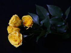 Yellow Rose | Flickr - Photo Sharing!