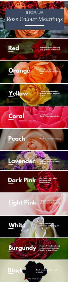 "Bring even more meaning to your funeral arrangements by knowing the colour meanings of roses with this infographic of 11 popular rose colours & their meanings. Learn to express ""I love you"" ""I miss you"" and ""farewell"" in flowers. #beautifulflowersroses"