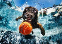 Underwater Dogs | Eggwhite