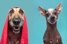 Hundefotografie im Studio - Fotografie Elke Vogelsang, Hildesheim Dog Photography, Fashion Photography, Studio, Dog Love, Giraffe, Competition, Dogs, Animals, Fotografia