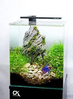 Favourites: Simplicity by Oliver Knott Just add a colourful betta fish on a minimalistic tank. Aquarium Terrarium, Mini Aquarium, Aquarium Fish Tank, Planted Aquarium, Aquascaping, Nano Cube, Cool Fish Tanks, Betta Fish Care, Shrimp Tank