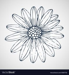 Daisies hand drawn vector image on VectorStock Vector Hand, Vector Free, Michaelmas Daisy, Flower Doodles, Line Drawing, Adobe Illustrator, How To Draw Hands, Graphic Design, Daisies
