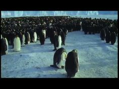Emperor penguins - The Greatest Wildlife Show on Earth - BBC