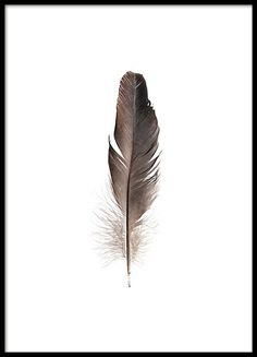 Beautiful poster with an illustration of a dark brown feather. Sleek and simple design that is easy to match with our other posters. Put the feather poster in a white or black frame for a stylish look. Looks great both alone and as part of a wall collage. www.desenio.com