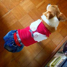 Today's hug. #dog #corgi #momohug #morinoki