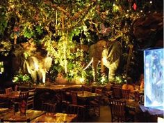 Rainforest Cafe - Disney Village Paris - Love the menu and service. Our daughter loved the animals!