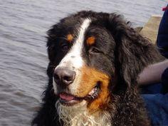 Gewrichtspijn, artrose | Natuurlijk voor hond
