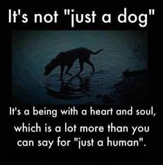 Animal cruelty and neglect includes intentional harm or ignoring an animal's needs. Animal cruelty has been linked to crime and domestic abuse. Learn more. Love My Dog, Puppy Love, Dog Quotes, Animal Quotes, Animal Cruelty Quotes, Animal Poems, Dog Sayings, Yorkies, Chihuahuas