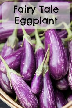Vegetables For The Market Garden Fairytale Eggplant for the market gardenFairytale Eggplant for the market garden Organic Fertilizer, Organic Gardening, Gardening Tips, Sustainable Gardening, Gardening Services, Vegetable Gardening, Plant Diseases, Bountiful Harvest, Weed Seeds