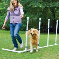 a pet agility course you can build as a pet-friendly project PVC pipe