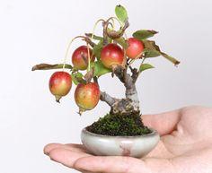 【日本小品盆栽組合】 - 2013年11月の小品盆栽