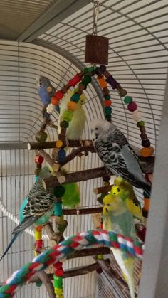 Wellensittich-Bild: Hausbesetzung - Wellensittich-Portal Welli.net Blue Parakeet, Budgie Parakeet, Budgies, Parrots, Diy Bird Cage, Bird Cage Stand, Pretty Birds, Beautiful Birds, Budgie Toys