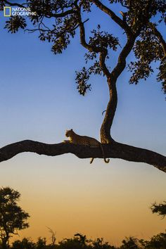 Todos os anos, a National Geographic promove seu concurso de fotografia para os amantes de fotografia ao redor do mundo.